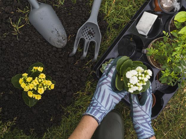 Gardener holding flower