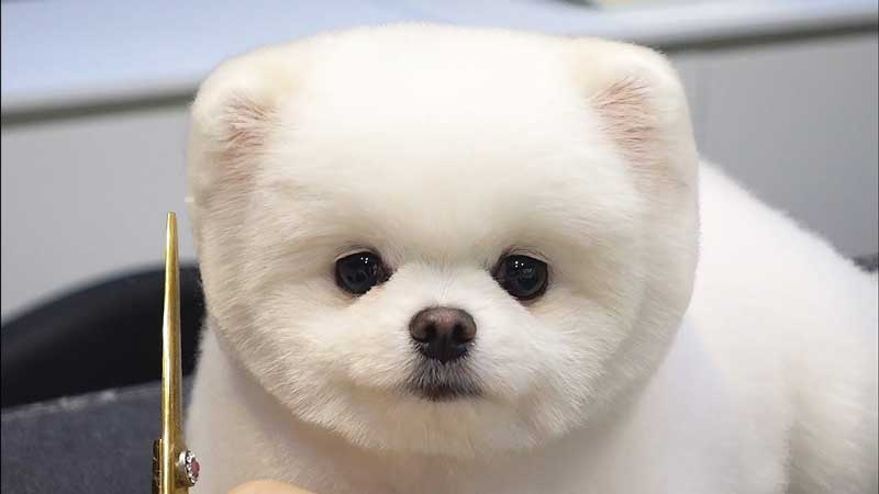 Puppy style