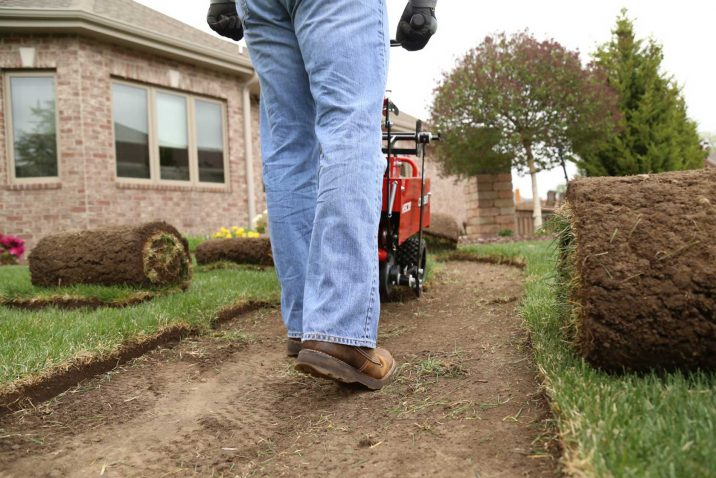 Removing Lawn Weed is Important