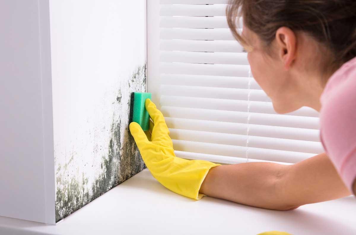 Scrub the mold thoroughly