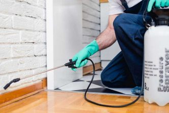 4 Essential Pest Control Tips for Homeowners