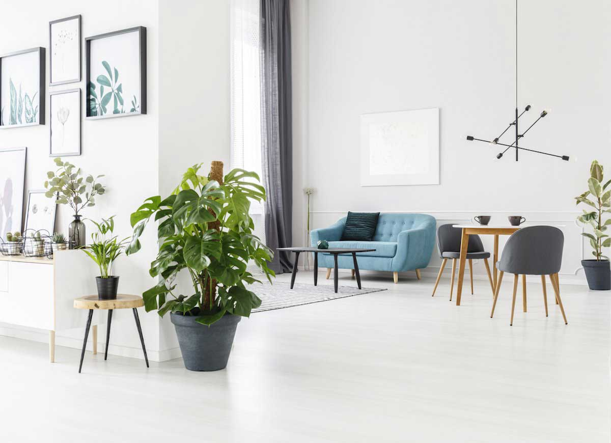 Beautify Your Home With Large Indoor Plants
