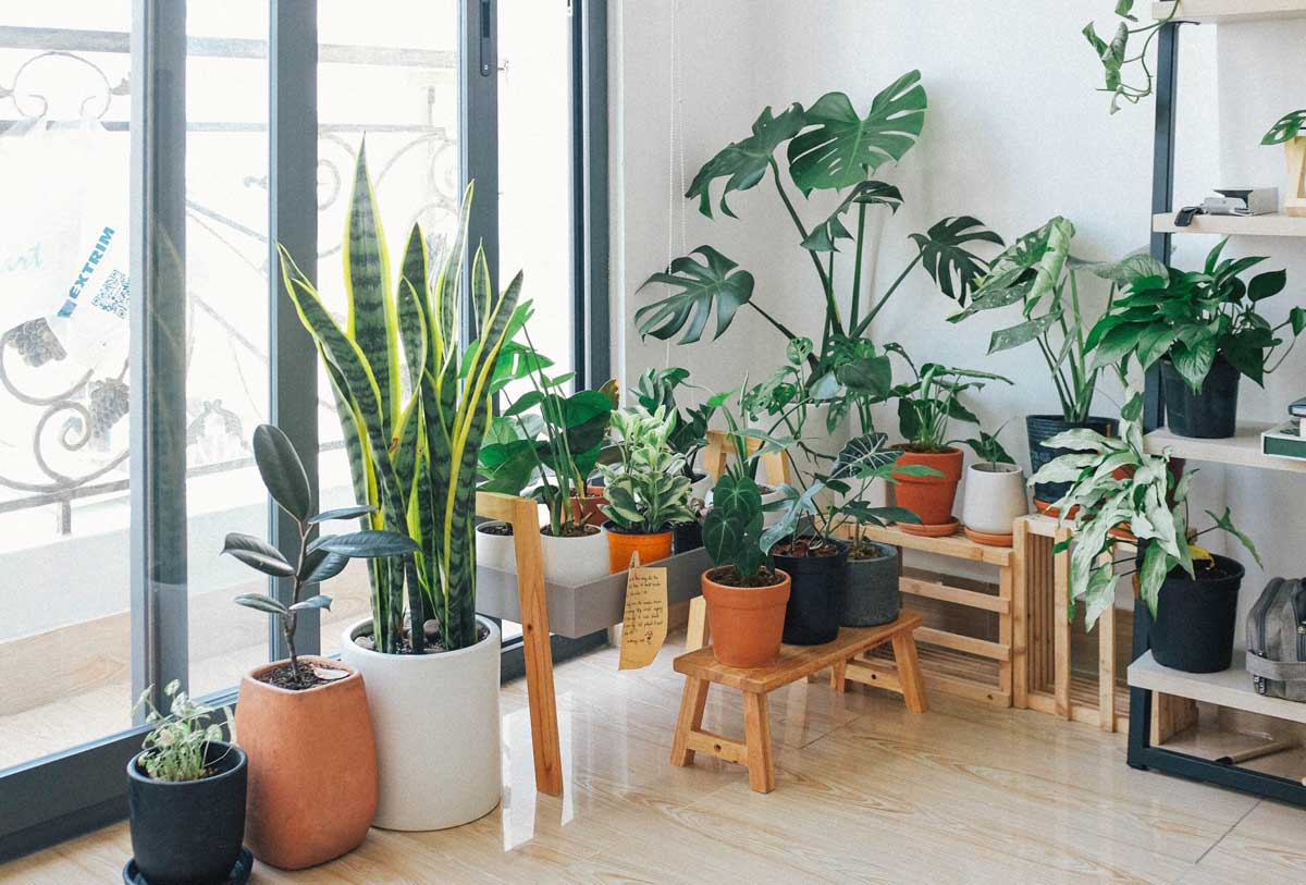 7 Easy To Care Indoor Plants