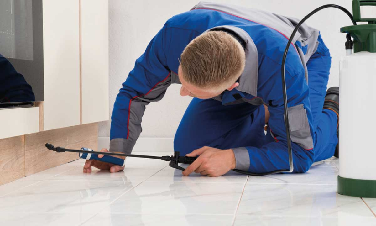 DIY vs Professional Pest Control
