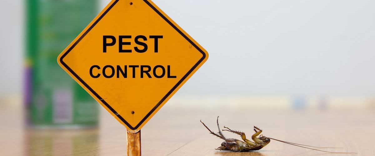 Pest Control DIY