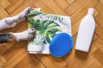 Pet Grooming Businesses