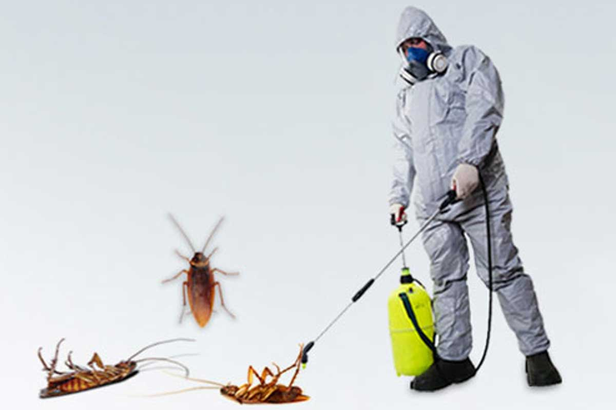 How to manage a cockroach outbreak at home