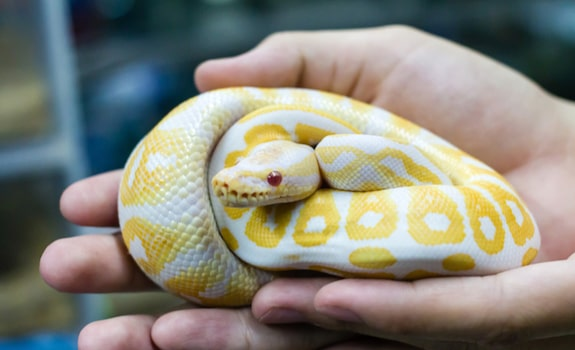 The Best Pet Snakes