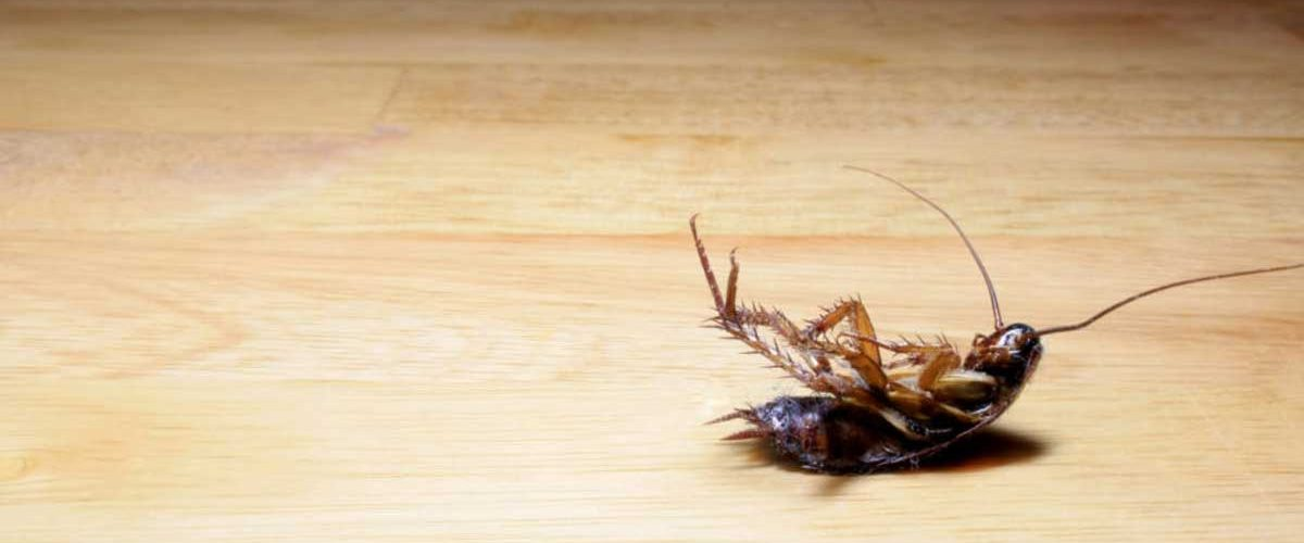 manage a cockroach outbreak